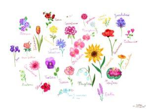 stampa botanica fiori