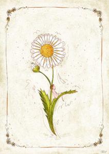 stampa botanica margherita. Petali e pensieri e ragazza con i capelli rossi