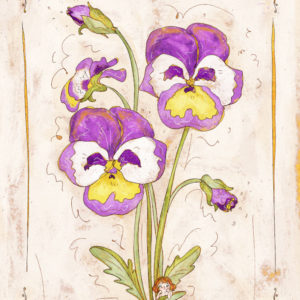 Disegno botanico Viola del pensiero